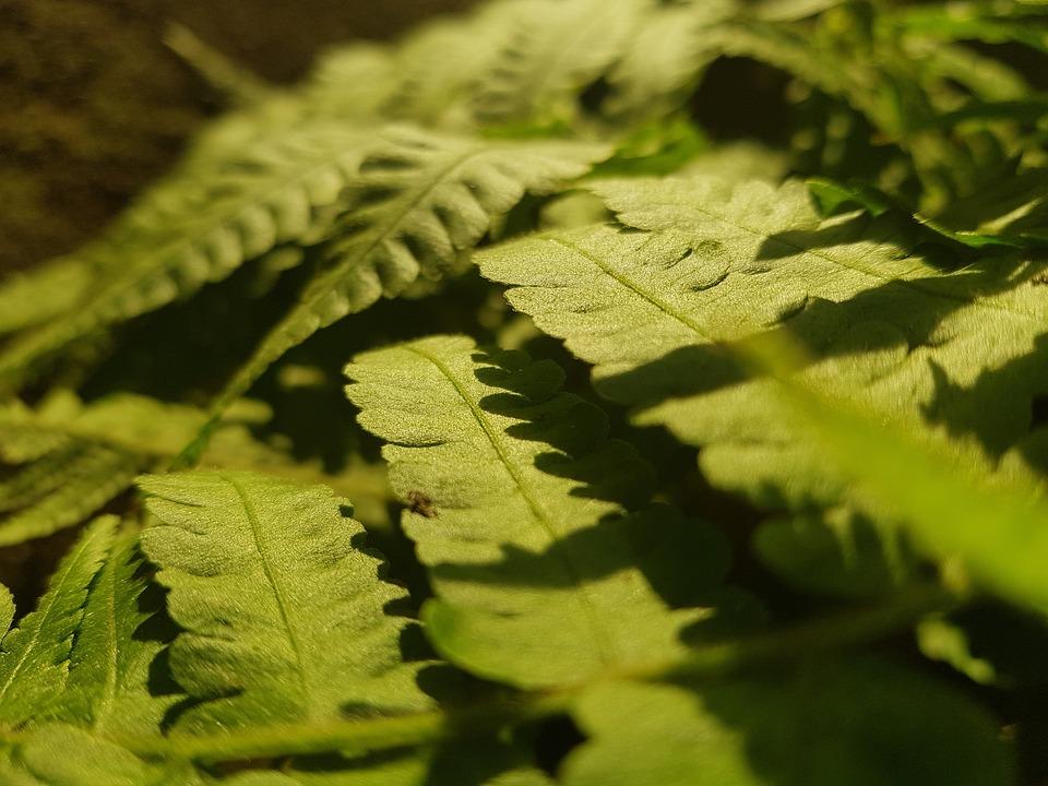 Green, Nature, Sun