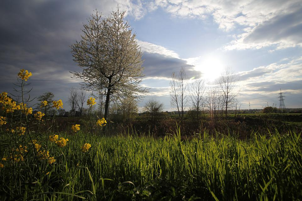 Unfinished, Nature, Sun, Flower, Tree, Rhine Valley