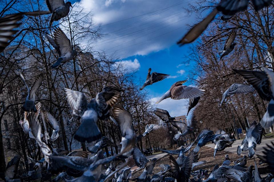 Pigeons, Summer, Sun