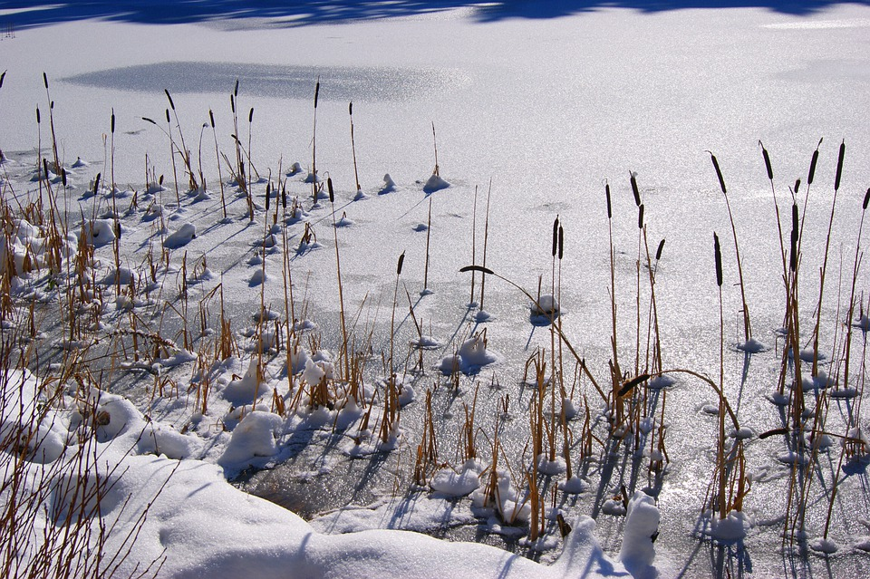 Snow, Winter, Wintry, Lake, Frozen, Reed, Sun