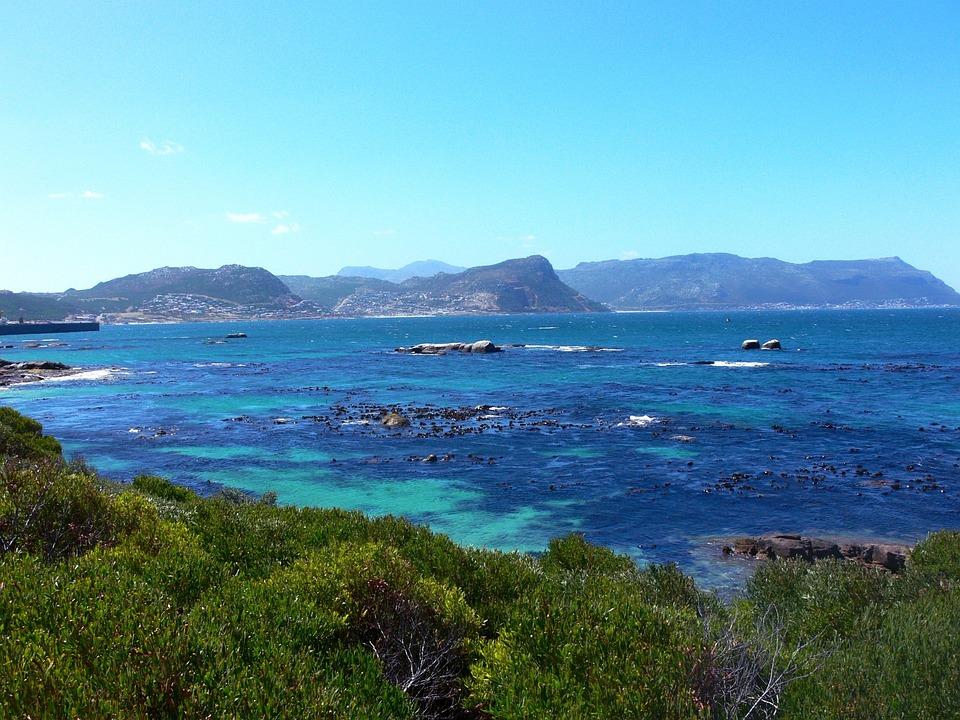 Seaweed, Tropical, Sea, Beach, Water, Sky, Sun, Blue