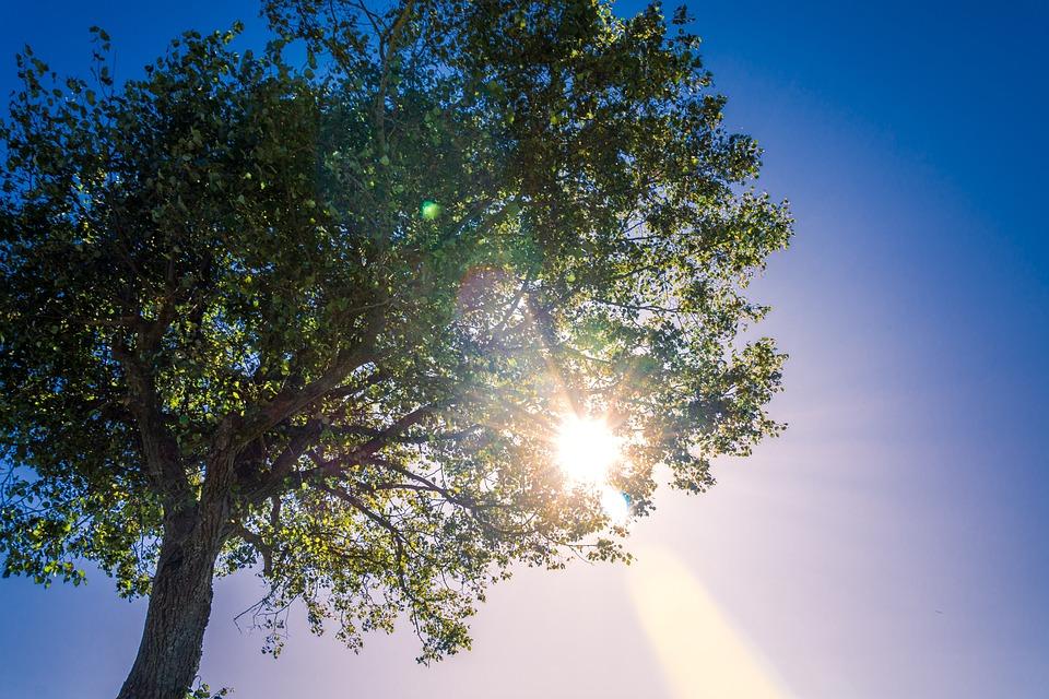 Old Women, Tree, Sun, Nature, Landscape, Sunset, Forest
