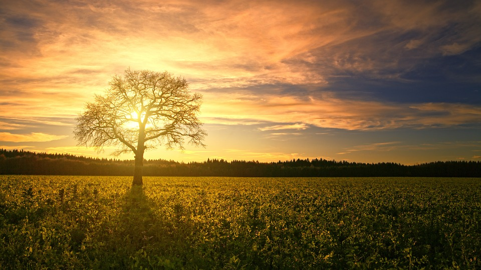 Sunset, Tree, Field, Sun, Dawn, Panorama, Back Light