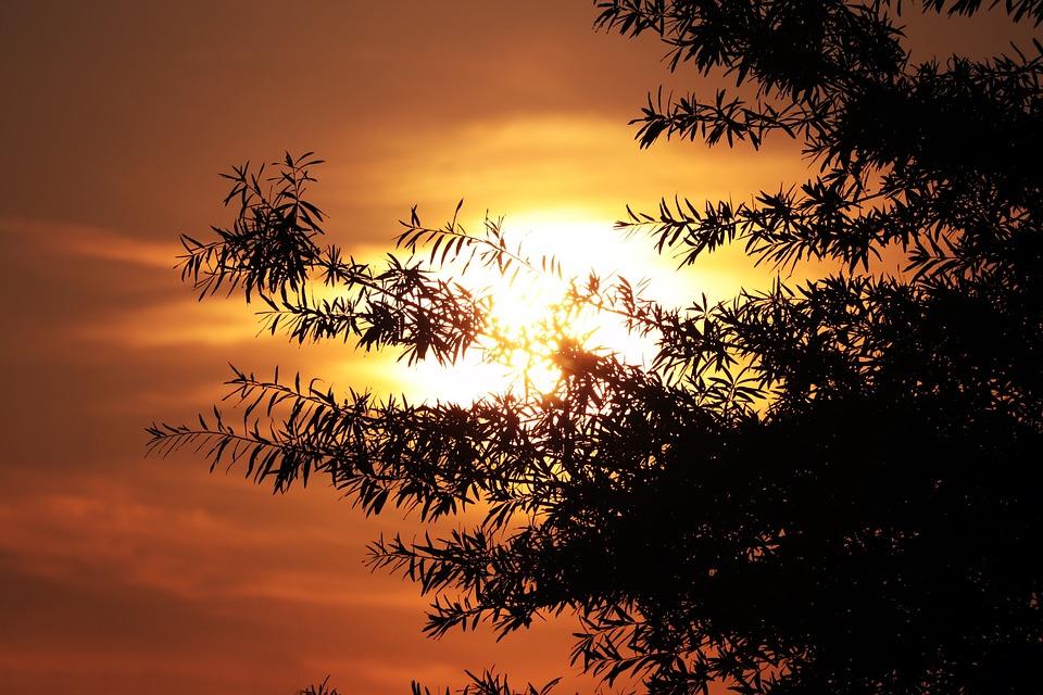 Sunset, Afterglow, Sun, Tree, Backlighting
