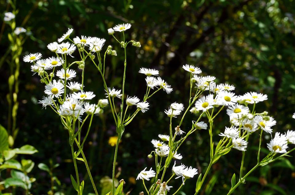 Wild Flowers, Roadside, White, Yellow, Sun-shaped