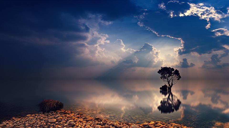 Sunset, Dawn, Sky, Tree, Sunbeam, Dusk, Ocean