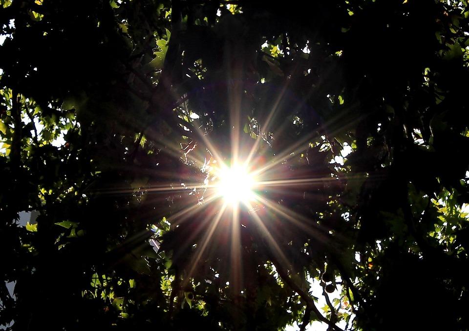 Sun, Sunbeam, Tree