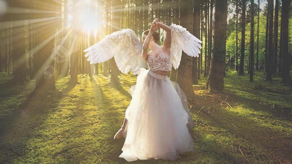 Forest, Angel, Sunbeams, Nature, Woods, Tree, Wings