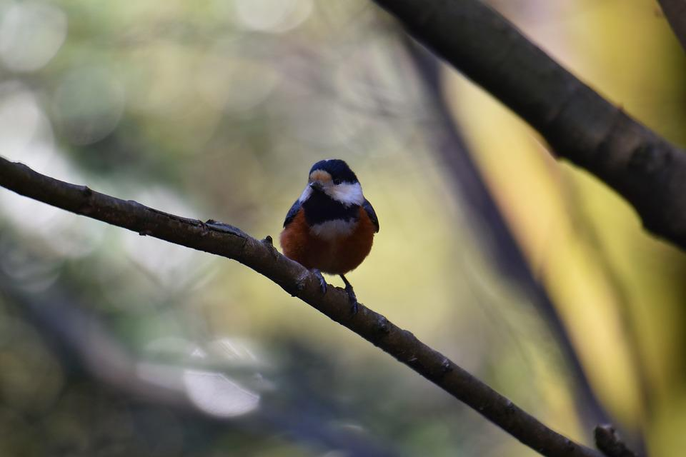 Animal, Forest, Wood, Sunbeams, Bird, Wild Birds