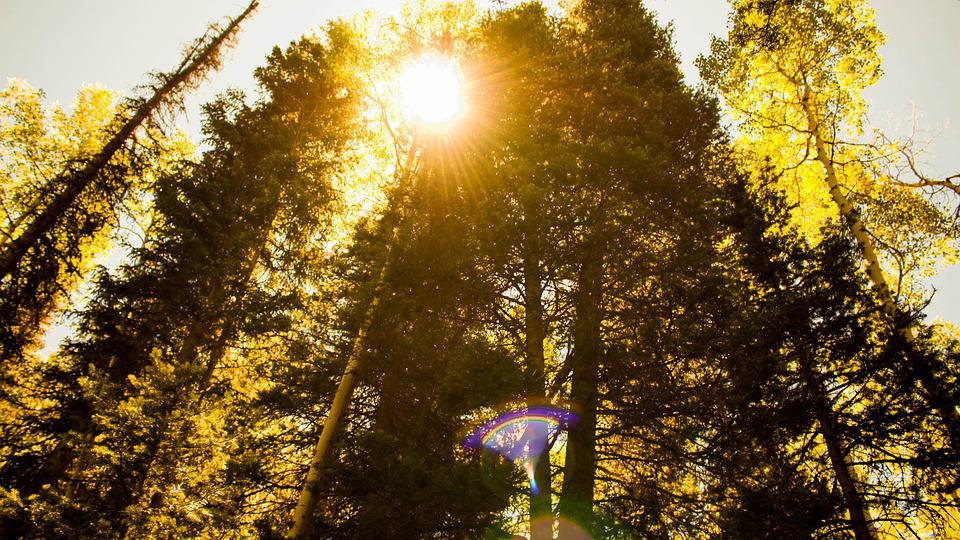 Sunburst, Trees, Nature, Landscape, Sun, Scenic, Summer