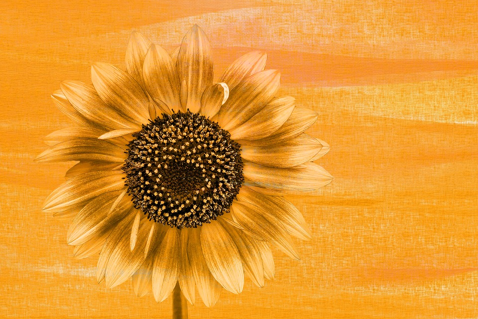 Sunflower, Blossom, Bloom, Summer Painting, Color