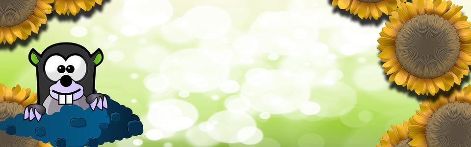 Banner, Header, Sunflower, Mole, Bokeh, Green, Homepage