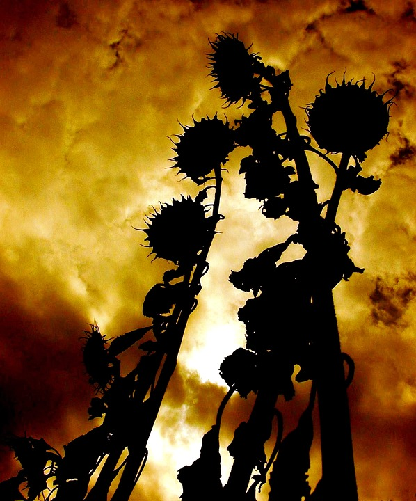 Atmosphere, Sunflower, Sky, Clouds