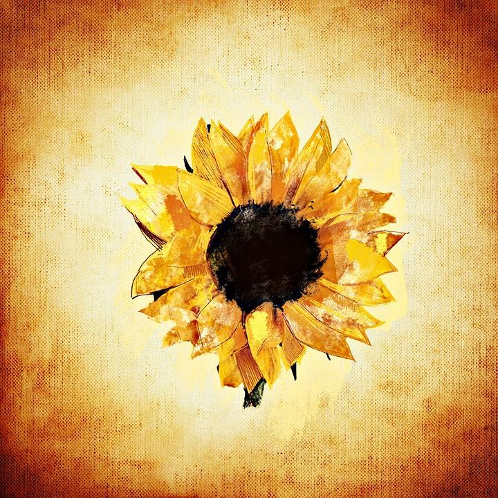 Sunflower, Summer, Plant, Flower, Yellow, Blossom