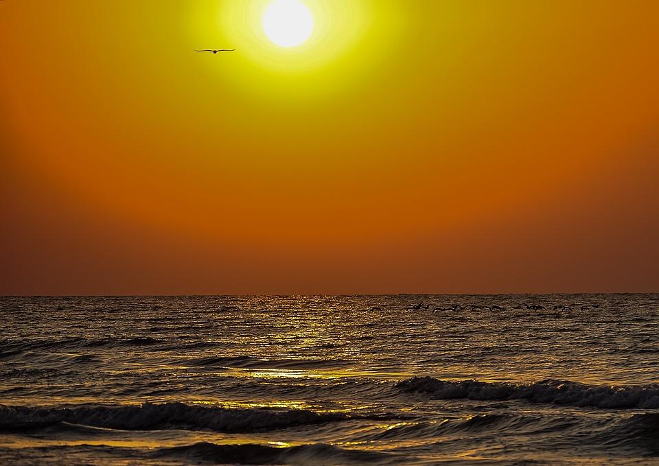 Sunrise, Waves, Golden, Bird, Sea, Sky, Sunlight, Water