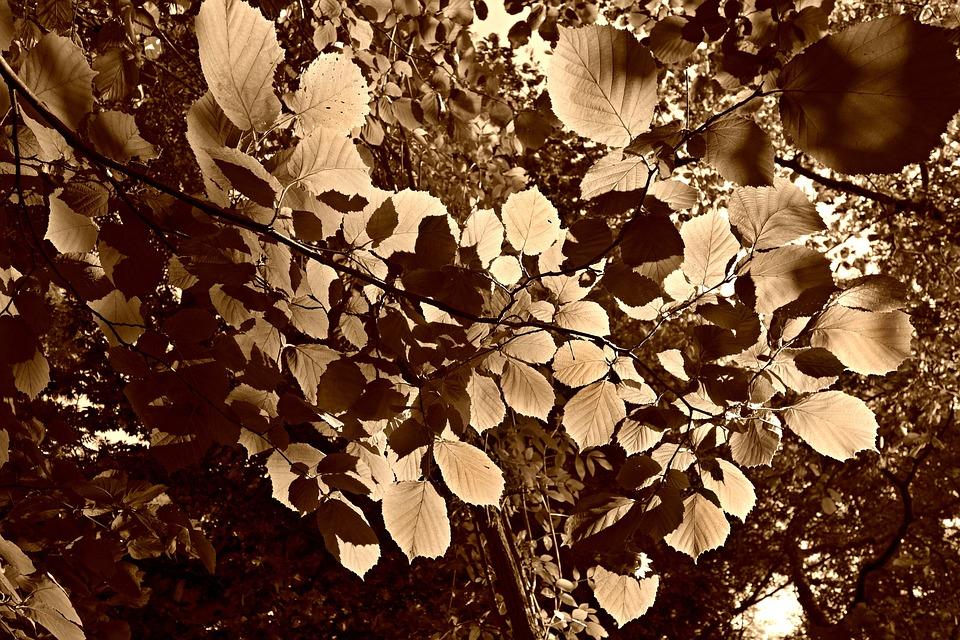 Leaf, Foliage, Sunlight, Leaves Against Sunlight