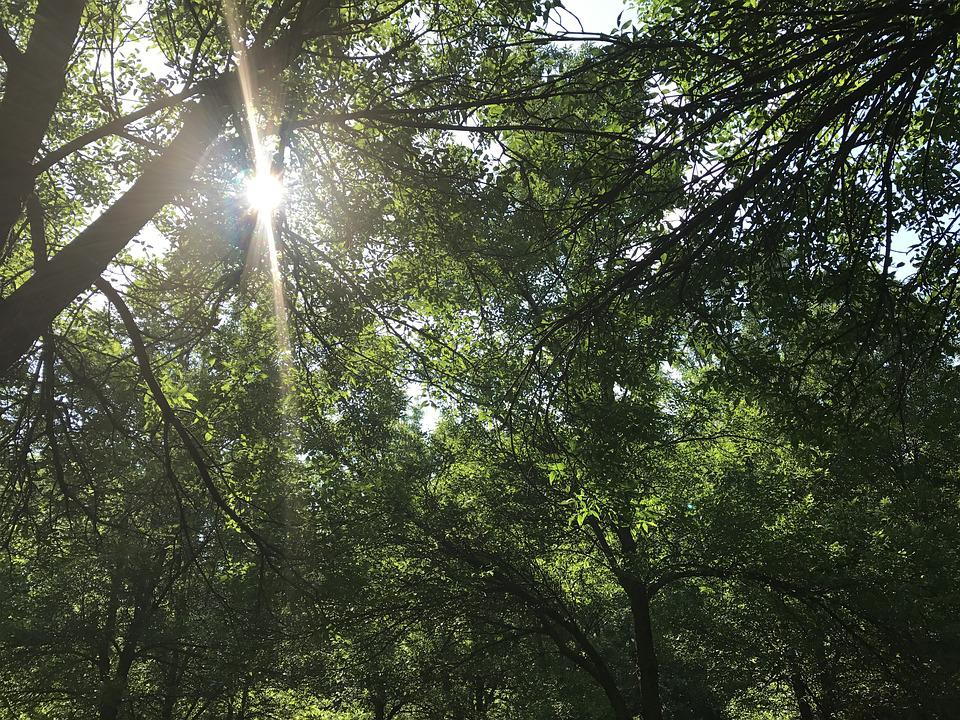 Mont Royal, Montreal, Park, Sunlight, Forest, Nature