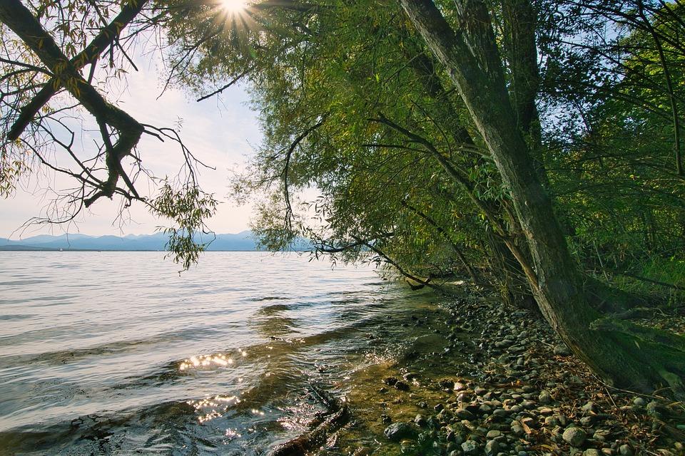 Riverbank, Lake, Nature, Trees, Sunny, Sunlight