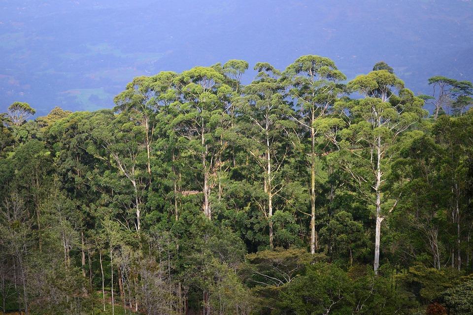 Tall Trees, Sunlight On Trees, Evening, Sun Set