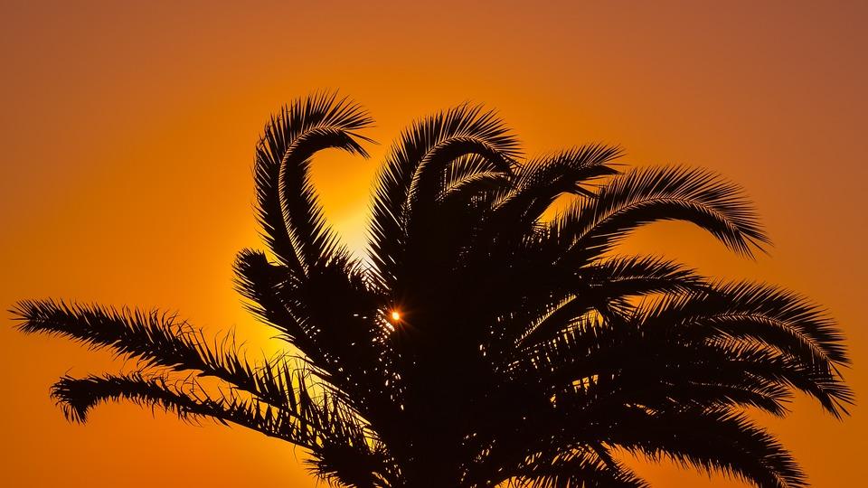 Palm Tree, Sunset, Sunlight, Orange, Summer, Exotic
