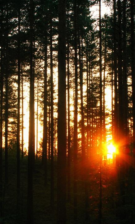 Sun, Dark, Summer, Sky, Sunlight, Night, Sunset, Trees