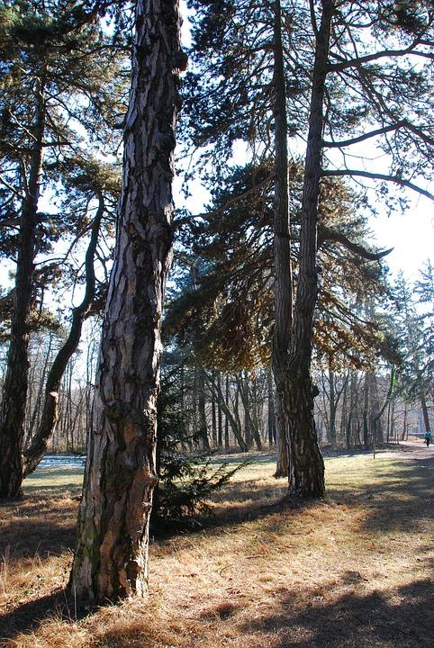 Lainzer Tiergarten, Forest, Trees, Landscape, Sunlight