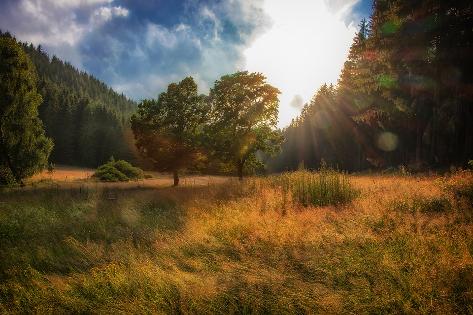 Forest, Trees, Meadow, Sun, Sunlight, Nature