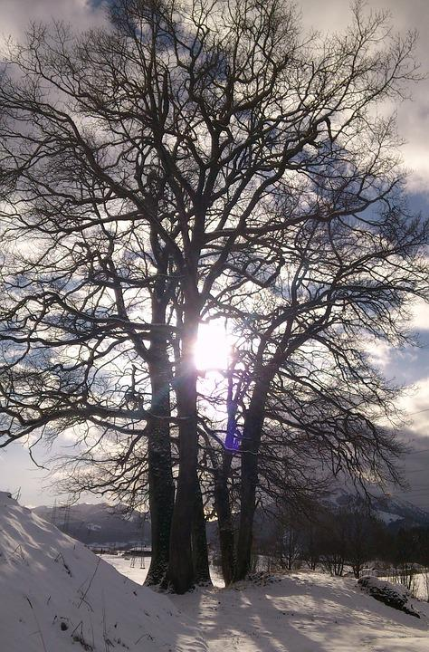 Winter Picture, Sunbeam, Mood, Sunlight, Atmosphere