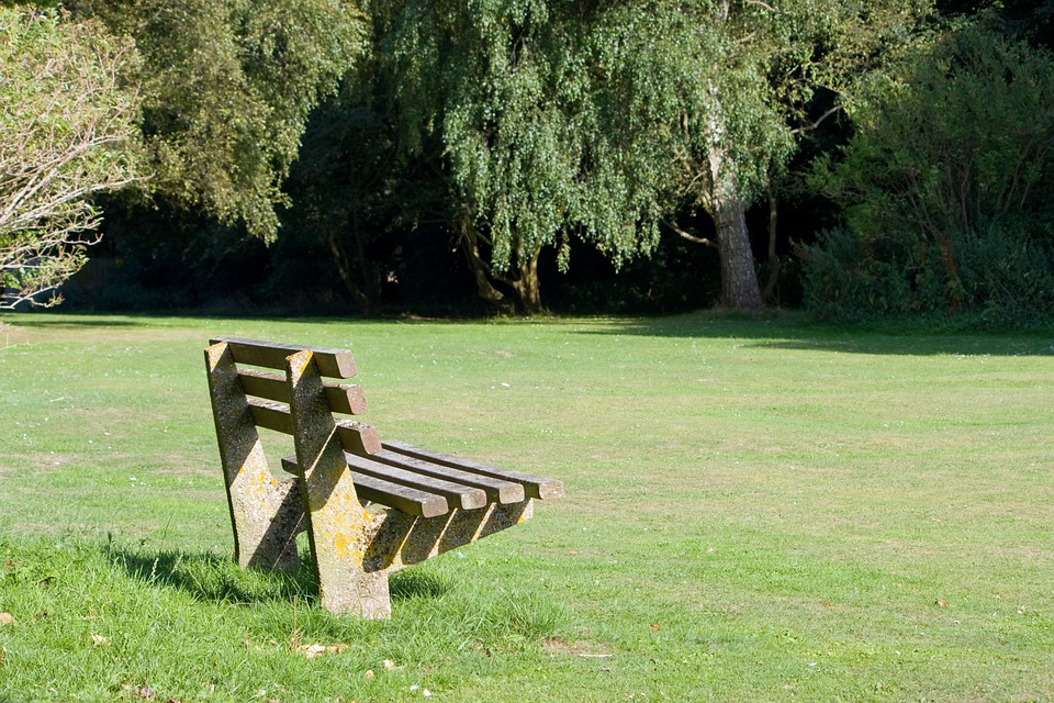 Bench, Park, Seat, Wooden, Grass, Green, Sunlit