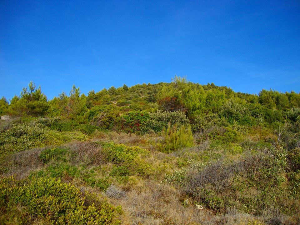 Nature, Sky, Blue Sky, Sunny, Air, Land, Plants