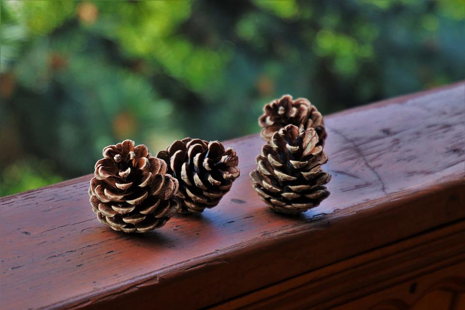 Cones, Spruce Cones, Seasons Of The Year, Sunny