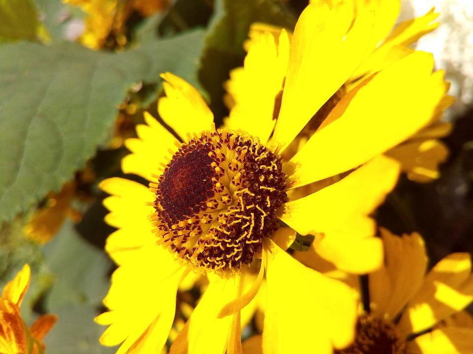 Yellow, Bright, Flower, Garden Flowers, Sunny