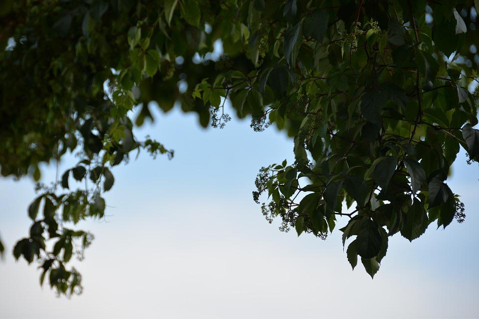 Sky, Green, Trees, Grass, Green Field, Sunny, Spring