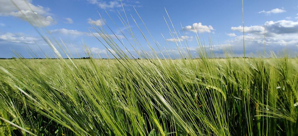Agriculture, Sunny, Nature, Summer, Plant, Harvest