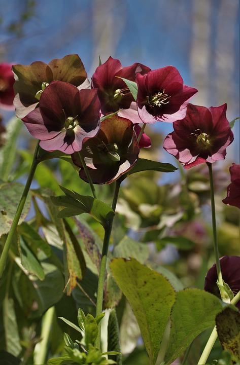 Nature, Plant, Flowers, Christian Roses, Light, Sunny