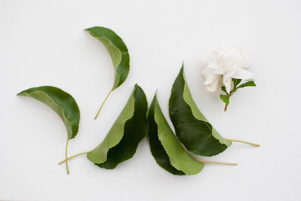 Flower, Leaf, Sunny, Nature, Plant, Green, Natural