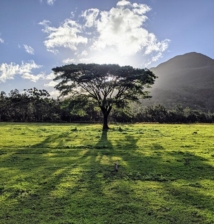 Tree, Field, Sunny, Sky, Pasture