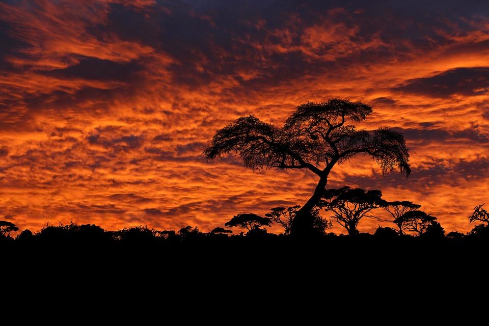 Dawn, Sunrise, Clouds, Sky, Orange, Trees, Bushland