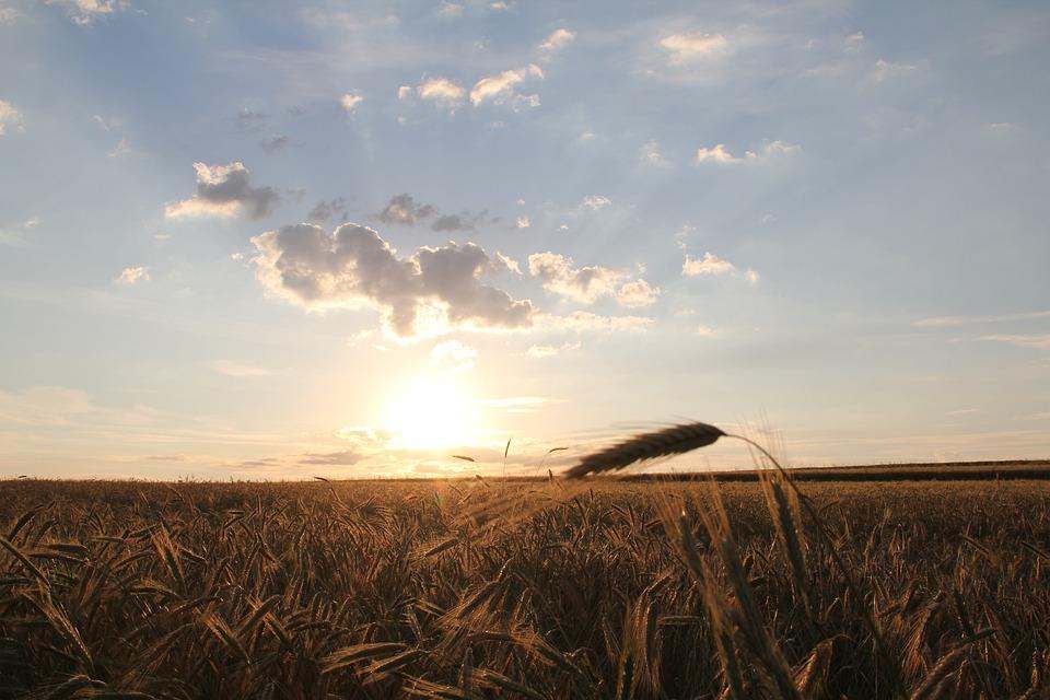 Sunrise, Clouds, Sun, Cornfield, Meadow, Field
