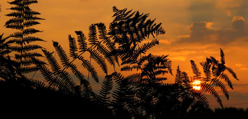 Sunrise, Sunset, Fern