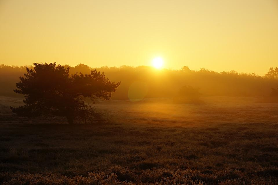 Sunrise, Heide, Fog