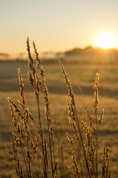 Field, Sunrise, Halm, Dawn, Morning Hour, Fog