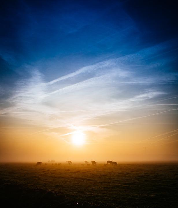 Sunrise, Morning, Dawn, Field, Grass, Animals, Farm