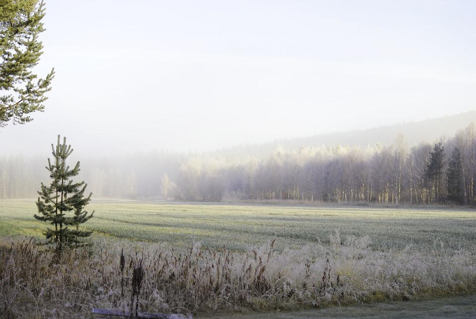 Nature, Mist, Sunrise, Sweden, Landscapes, Forest