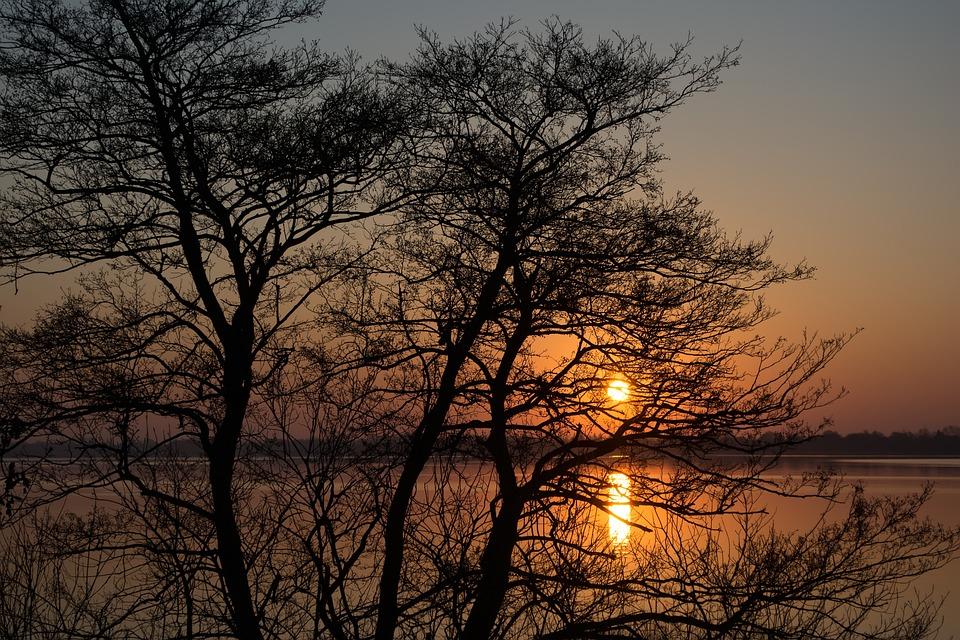 Sunrise, River, Tree
