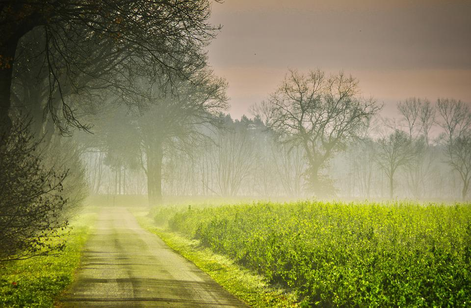 Autumn, Sunrise, Road, Fog, Field Of Rapeseeds
