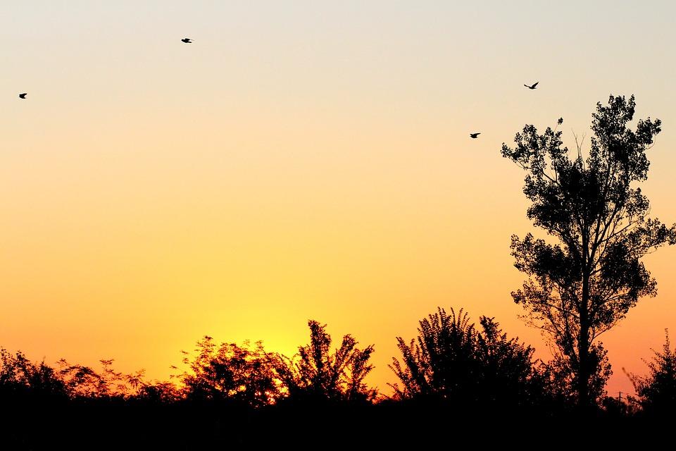 Sunrise, Sky, Birds, Tree, Shadows, Red
