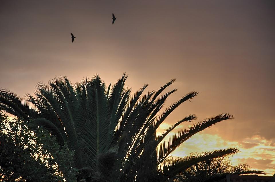 Palm Tree, Early Morning, Sunrise, Sky, Summer