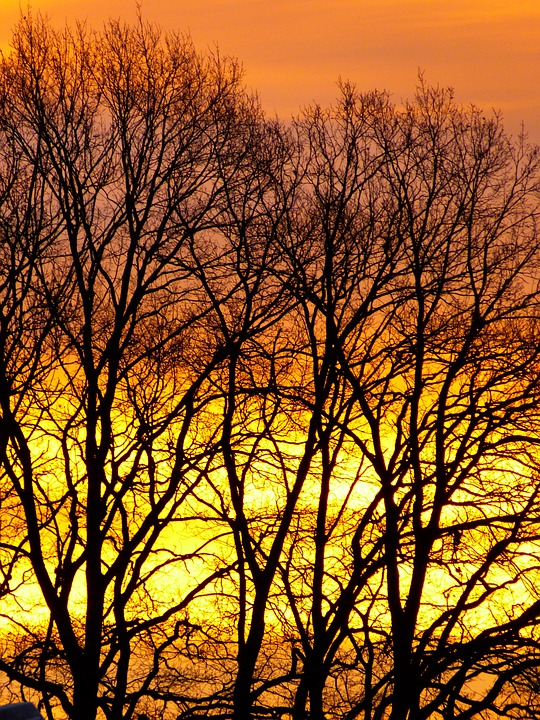 Sunrise, Winter Sunrise, Skies, Sky, Trees