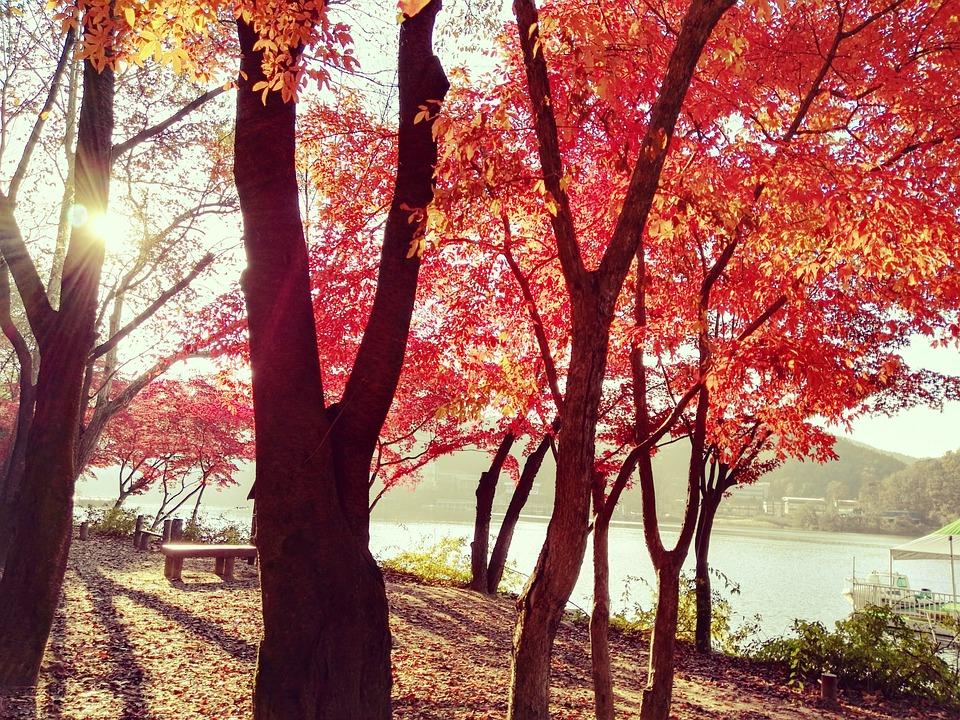 Sunscreen, Tree, Lakeside